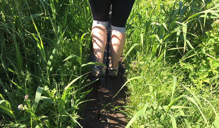 Linda bein på tur over et parti med myr og siv.