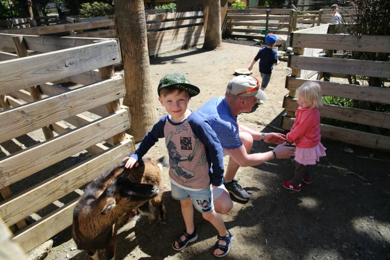 Barn klapper geiter